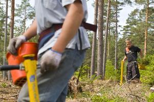 Tre miljoner skogsplantor ska planteras i norra Dalarna av Stora Enso Skog.