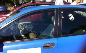 Hund lämnades kvar i över en och en halv timme i värmen innan ägaren kom ut och rastade den. Foto: Gubb Jan Stigson
