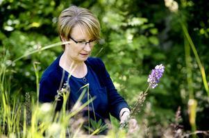 Annika Johansson på återbesök i det behandlade området på Klampenborg. Några lupiner står fortfarande i blom och Annika tar snabbt bort dem för att de inte ska hinna sprätta sina frön.