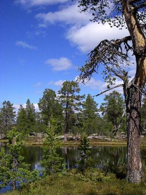 Naturreservatet Lövåsen-Fillingåsen  i Härjedalen bedöms som estetiskt tilltalande. Det bidrar starkt till regionens skönhetsvärden och är ovärderlig för landskapsbilden.Foto: Göran Eriksson