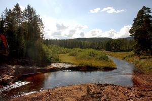 Både miljön och skogen ska skötas, anser Sollerö Gemensamhetsskogs Samfällighetsförenuing.