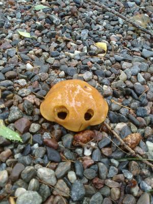 Hittade en ovanligt söt svamp...