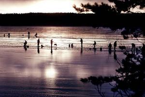 """Landösjön är ett av länets populäraste fiskevatten. Tio fiskar per kort och dag får man ta upp. Tar du mer kan det bli avstängning. """"Vi har regler som är till för att följas"""", säger fiskeföreningens ordförande Jan Engstedt."""