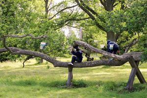 Ibland är det bra att ta en paus i slöjdandet tycker barnen, och vad passar då bättre än lite trädklättring?