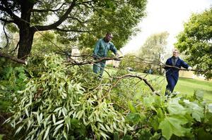 Liomba Puteho och Jimmie Hellberg, som ska bli handledare, tar ned grenar från träd.