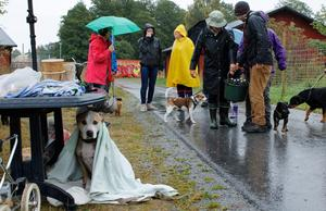 Alla uppskattade inte vädret.