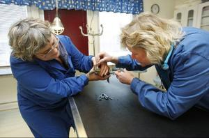 Veterinär Astrid Borg och Lisa Nilsson undersöker en av djurhusets sköldpaddor som känner sig krasslig.