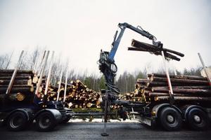 Fram till 15 juli har skogsägarna på sig att ta bort stormfälld skog, men Skogstyrelsen tror att det kan bli problem att hinna med det.