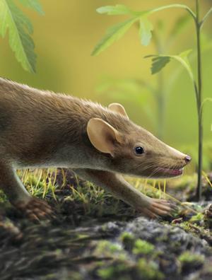 Rekonstruktion av ett primitivt däggdjur från kritperioden. Merparten av de arter som levde i slutet av perioden utplånades samtidigt med dinosaurierna.   Oscar Sanisidro
