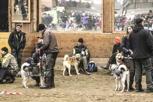 Tålamod måste man ha, när det är två ringar och nära 170 hundar.