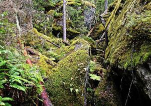 Skogen kring grottorna är till viss del orörd på grund av den oländiga terrängen.