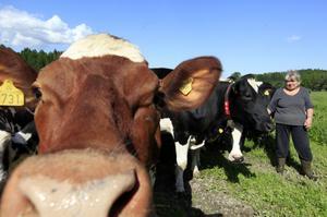 Lotta Zetterlund är bonde, ombudsman för LRF och sitter som vice ordförande i styrelsen för Gefleortens mejeriförening. Hon var med och fattade besparingsbeslutet som innebär att runt 15 mejerimedarbetare kommer att varslas.– Vi vill ha vårt mejeri kvar här i Gävle, då måste vi tyvärr göra de här rationaliseringarna.