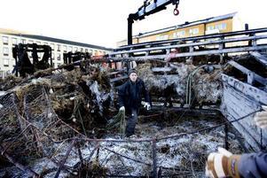 slitsamt. Det tog sin tid att få loss delarna som hade frusit fast i varandra. Harry Pyykkö fick ta till en kofot för att bända loss träplankorna.
