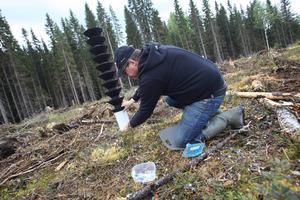 15000 granbarkborrar vittjades i tre fällor under måndagen, berättar Nils Frank. Foto: Arkiv
