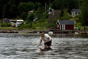Sofia  Öström tar vattenprover i Slädaviken, Alnö. Proverna visar på förhöjda halter av bakterier.