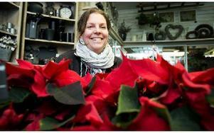 Julstjärnan är nummer ett, klargör Malin Westholm. Foto: Peter Ohlsson/DT