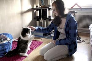 Leker. Katten Nisse är inte svårflörtad och leker gärna en stund med matte Cecilia i hennes rum, speciellt när det finns godis.