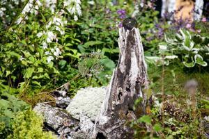 Att våga strunta i gräsmattan är ett tips Wictoria Boije ger. Grusgångar framhäver växterna mer, annars kan det bli ärtgrönt och platt.