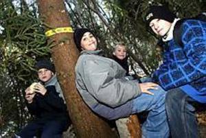 Foto: NICK BLACKMON Fikapaus i kojan. Fredrik Brodin-Holmqvist, Adam Lindström, Martin Mattsson och Alexander Malmgren fikade i granriskojan som de byggt i skogen. Det är faktiskt ganska varmt här inne, sa de.