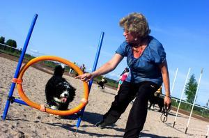 Husse Kerstin Gunnarsson coachar Bellman som älskade sällskapet av många hundar. Tisdagkvällarna kommer att vara öronmärkta för hundarna.