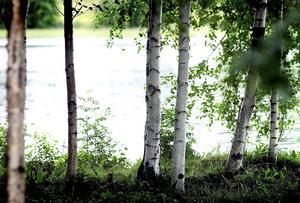 Klassisk sommarvy vid en sjö i Medelpad.