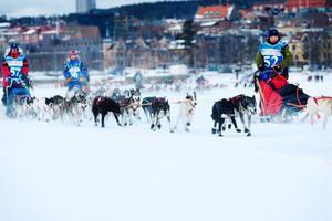Starten för Amundsen race årgång 2009 har gått på Storsjöns is. Tävlingen går nu via Oviksfjällen till Ljungdalen, vidare via Helags till Tänndalen, där den första av två obligatoriska vilopauser är förlagd. Tävlingen fortsätter sedan via Kärringsjön till Grövelsjön och sedan vidare in i Norge via Femunden, Tufsingdalen, Grådalen. Målgången är i Röros. Foto: Ulrika Andersson