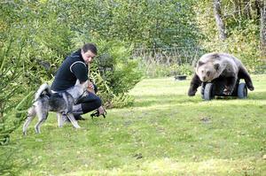 Övning. En av aktiviteterna på jakt- och vildmarksmässan var att hundägare kunde testa sin hunds reaktion på en radiostyrd björn.
