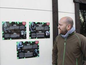 Alla Furuviks sex chimpanser ska ingå i flocken. Djurchefen Daniel Hansson har lite bekymmer över hur han ska få ihop dem.