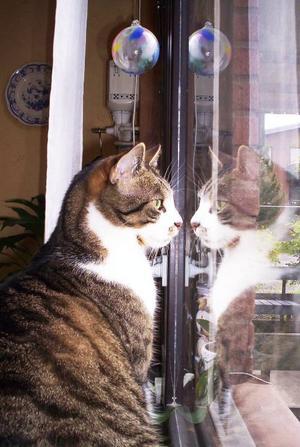 """""""Vi är varken hund eller katt. Våra husdjur är väldigt unika båda två, därför är de bäst! Kattenheter Kim och är en huskatt. Hunden heter Megan, men Kennelnamnet är Scudabout Ava,Australiensiskterrier."""" Foto: Lena Arvidsson, Östersund."""