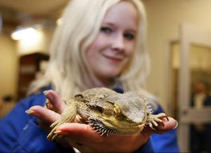 Katja Thornéus från Brunflo med en av djurhusets ödlor.