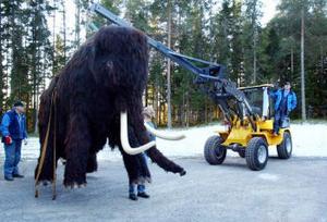 Mammutarna levde ungefär som elefanterna gör, i hjordar. Den riktige Sergej var 50 år och ålderman i sin flock, som inbegrep cirka 30 djur.