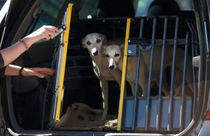 En hundtransport skyddar både hunden och passagerarna vid en krock. Olika hundraser behöver olika stora burar – se till att du skaffar en hundtransport som har rätt mått för din hund.