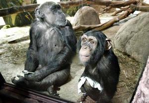 Apornas värld var en nysatsning parken presenterade 2008.