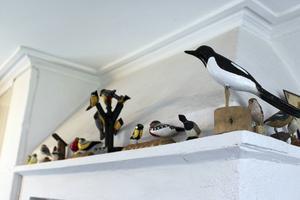 På spiskransen vakar några fåglar.