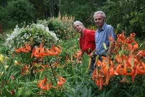 Berndt och Birgitta Berglund har samlat på sig mycket liljor och dagliljor men även hostor och nävor.
