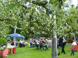 Äppelblom. Bild: Ann-Marie Olofsson