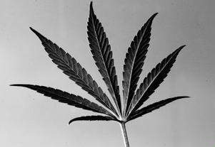 Mycket av den narkotika som svenskar använder kommer från Christiania.