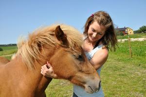 Hästarna blir väldigt kelsjuka så fort Mailinn kliver in i hagen.