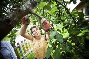 Pia Hedblom Hansson låter grenarna falla till marken.
