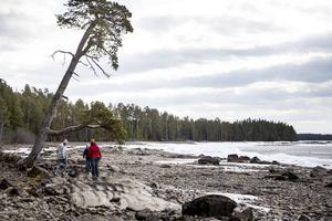 Bynäset på Frösön är en av flera områden där Försvarsmakten hittat höga halter av PFAS.
