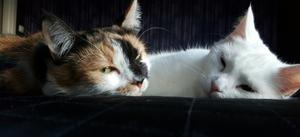 Mina fina, men trötta, flickor som myser i sängen en kylig marsdag.