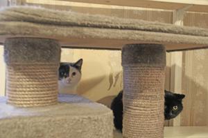 Många av katterna är skygga för främlingar. Här är det Selma och Sture som inte vågar sig fram.