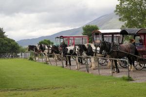 Häst och vagn i Killarney.