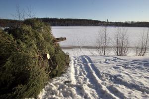 De gamla julgranarna ska skapa lekplatser för fisken i Lillfjärden.