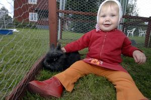 Djurkul. I Rutnäs finns de kramgoa smådjuren. Här är det ettåriga Emilia Eriksson, från Lima, som hälsar på en liten kanin.