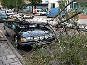 Foto: JOHAN PIHLBLAD Att parkera intill ett träd var inte att rekommendera i går. På Odengatan i Sandviken slutade det så här.