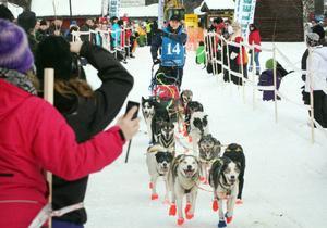 Den norske tv-kändisen och äventyrare Lars Monsen är anmäld till Amundsen Mid Scandinavian Sled Dog Race 2014. Här på bild i starten av fjolårets lopp, där han placerade sig på en tredjeplats med sitt 12-spann.