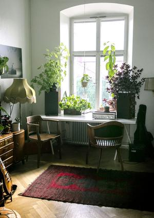 I de stora fönstren badar växterna  i ljus och stortrivs.