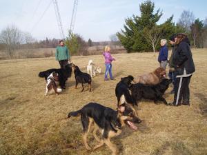 Varje morgon träffas några ibland många hundar och deras ägare på gärdet i Kolbäck,det är lika roligt för hundarna som för husse eller matte.