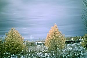 bilden är tagen med ett IR-filter och för att få träden att se ut som att det är sommar fast det är vinter, så har jag trixat med färgtoner i Photoshop med nått som heter  Channel Mixer som det heter.